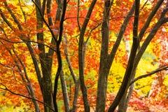 Foresta stagionale delle foglie della corteccia di albero del tronco di colore spesso scuro di caduta immagine stock libera da diritti