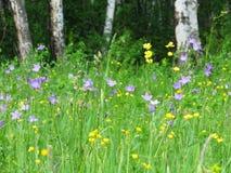 Foresta-steppe di estate Fotografie Stock