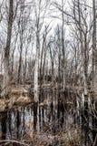 Foresta sterile terrificante della palude Fotografia Stock Libera da Diritti