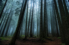 Foresta strana e lugubre fotografia stock
