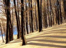 Foresta a strisce di inverno Fotografie Stock