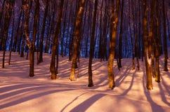 Foresta a strisce 2 di inverno Fotografie Stock Libere da Diritti