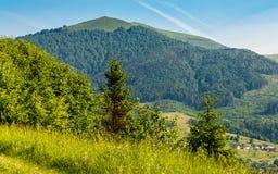 Foresta su un pendio di collina della montagna nella zona rurale Fotografia Stock Libera da Diritti