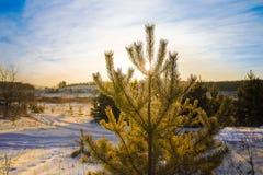 Foresta su una mattina di inverno fotografia stock