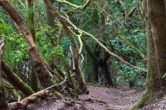 Foresta subtropicale in Tenerife, isole Canarie, Spagna Fotografia Stock