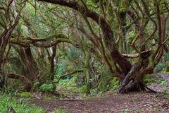 Foresta subtropicale in Tenerife, isole Canarie, Spagna Fotografie Stock