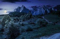 Foresta sul pendio di collina erboso in tatras alla notte fotografia stock