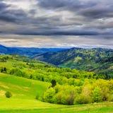Foresta sul prato del pendio di collina in montagna fotografia stock libera da diritti