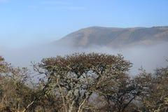 Foresta sull'azienda agricola nel Sudafrica di mattina Fotografia Stock Libera da Diritti