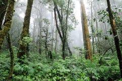 Foresta sull'più alta montagna Immagini Stock