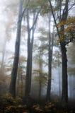 Foresta sulla montagna di Medvednica Fotografia Stock