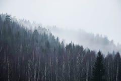 Foresta sulla montagna in nebbia Fotografia Stock