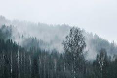 Foresta sulla montagna in nebbia Immagine Stock
