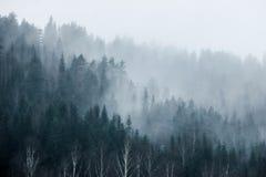 Foresta sulla montagna in nebbia Immagini Stock Libere da Diritti