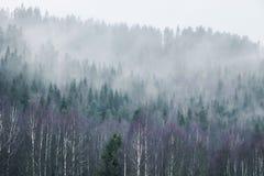Foresta sulla montagna in nebbia Fotografie Stock