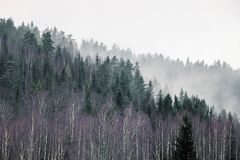 Foresta sulla montagna in nebbia Fotografia Stock Libera da Diritti