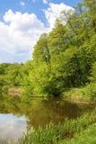 Foresta sulla riva del lago Fotografia Stock