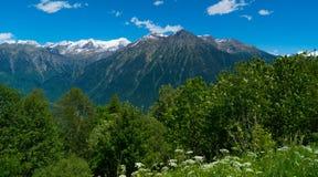 Foresta sulle montagne rocciose in Svizzera Kanton Tessin Fotografia Stock