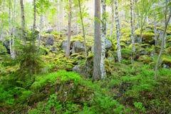 Foresta sulle rocce e sui canyon del granito Fotografie Stock