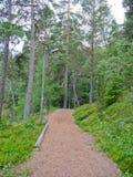 Foresta svedese Immagini Stock
