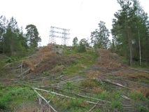 Foresta svedese Fotografia Stock Libera da Diritti