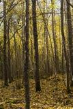Foresta svedese di autunno Fotografia Stock Libera da Diritti