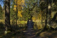 Foresta svedese di autunno Fotografie Stock