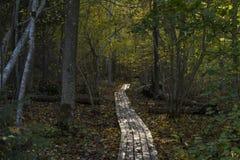 Foresta svedese di autunno Immagini Stock