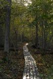 Foresta svedese di autunno Immagini Stock Libere da Diritti