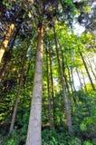 Foresta tedesca Immagini Stock Libere da Diritti