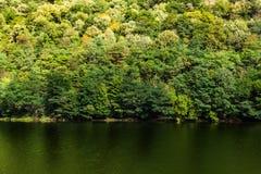 Foresta temperata in autunno Immagini Stock