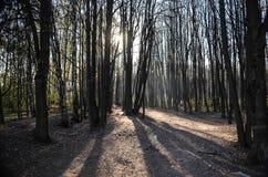 Foresta in tempo soleggiato Fotografie Stock