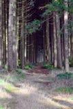 Foresta terrificante Fotografie Stock