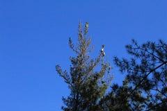 Foresta tipica in Galizia fotografie stock libere da diritti
