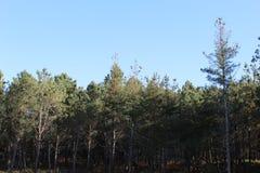 Foresta tipica in Galizia fotografia stock libera da diritti