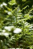Foresta tranquilla Fotografie Stock Libere da Diritti