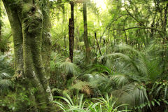Foresta tropicale fotografia stock libera da diritti