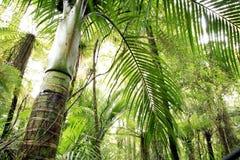 Foresta tropicale Fotografie Stock Libere da Diritti