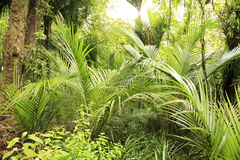 Foresta tropicale Immagini Stock