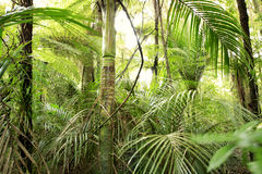 Foresta tropicale immagine stock