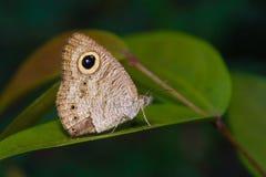 Foresta tropicale della farfalla Fotografie Stock Libere da Diritti
