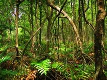 Foresta tropicale della mangrovia (Malesia) Immagini Stock Libere da Diritti