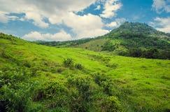 Foresta tropicale della montagna, palme al sole Immagine Stock
