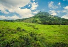 Foresta tropicale della montagna, palme al sole Fotografie Stock