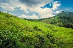 Foresta tropicale della montagna, palme al sole Immagine Stock Libera da Diritti