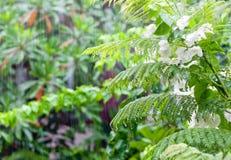 Foresta tropicale dopo la pioggia Fotografia Stock Libera da Diritti