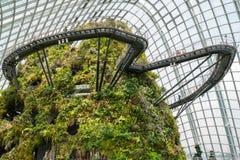 Foresta tropicale, giardino botanico a Singapore 4 Fotografia Stock Libera da Diritti