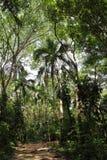 Foresta tropicale lungo il mare caraibico Fotografia Stock Libera da Diritti