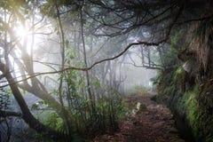 Foresta tropicale, Madera, Portogallo Fotografie Stock