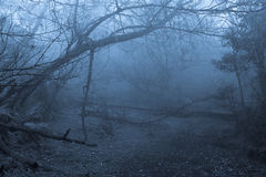 Foresta tropicale in nebbia Fotografie Stock